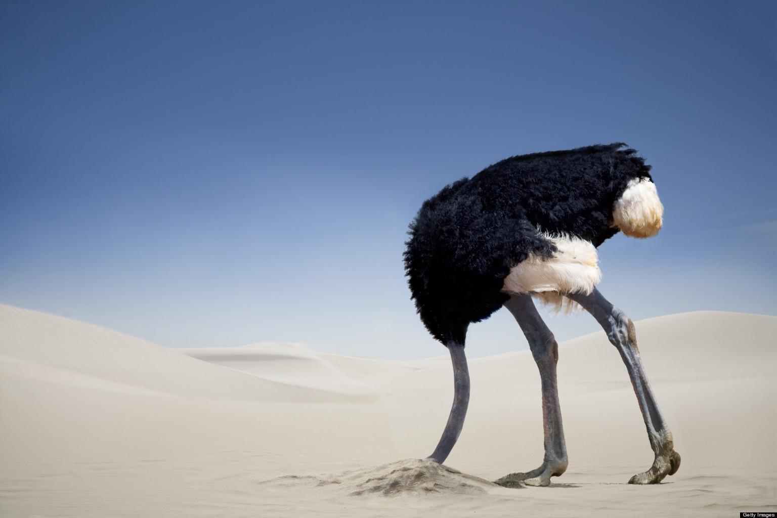 ostrich head in sand | (not so) quiet girl