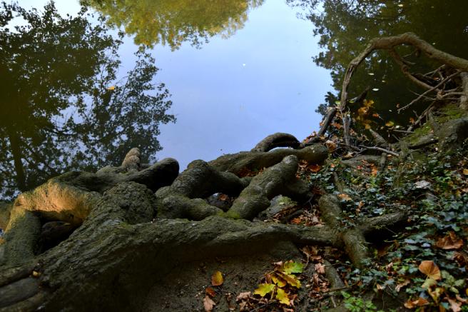 Pitshanger park image