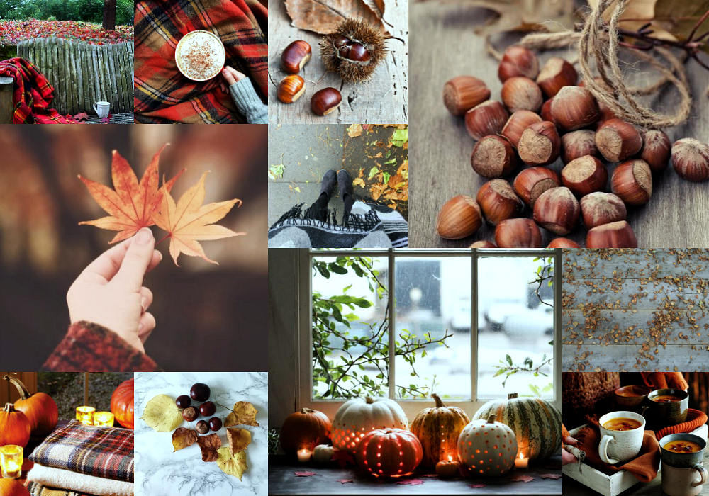 autumn moodboard mood board fall